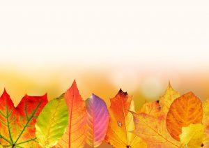 Tipp Der Woche Funf Schone Deko Und Bastelideen Fur Den Herbst